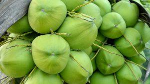 การใช้ปุ๋ยบุญพืชกับมะพร้าว
